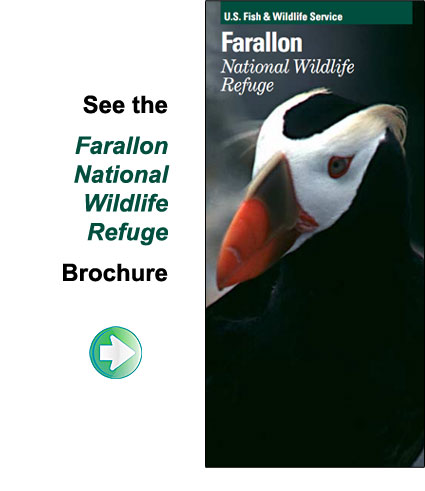 Farallon Islands National Wildlife Refuge brochure