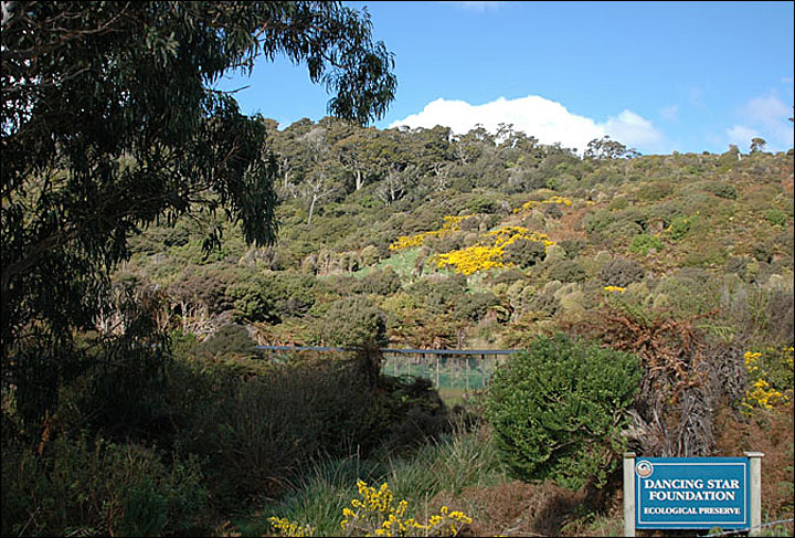 Dancing Star Ecological Preserve in New Zealand