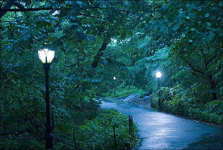 Pathway in New York's Central Park