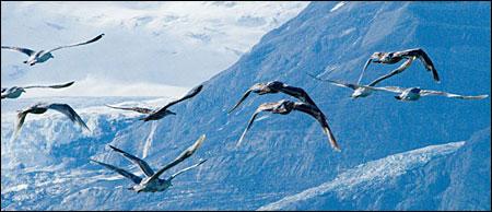 Birds at Wrangell-St. Elias in Alaska